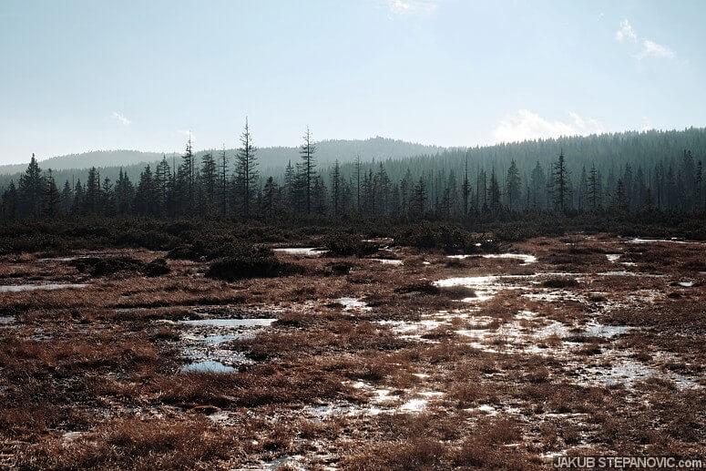 Peat bog in Jizerske Hory