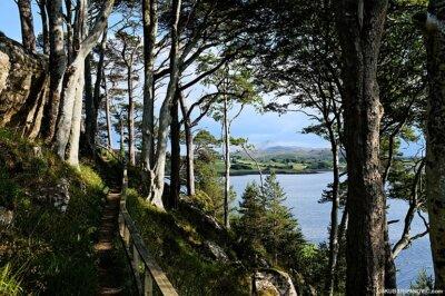 Scottish forests